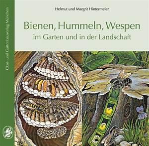 Bienen Und Wespen : hummeln bienen wespen und hornissen gemeinsamkeiten und unterschiede ~ Whattoseeinmadrid.com Haus und Dekorationen