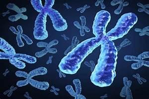 Scientists Decode Mystery Of  U2018inactive U2019 X Chromosome In Women