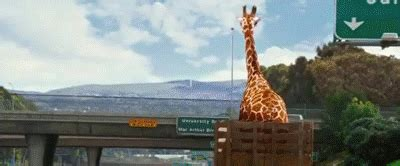hangover part iii alans giraffe    gif