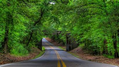 Trees Road Forest Tree Landscape Wallpapers 4k