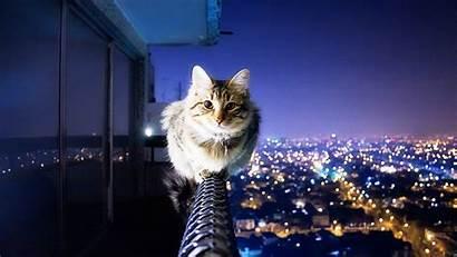 Cat Cats Wallpapers Desktop Kitten Background Computer