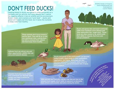 is it okay to feed ducks bread answerthis co
