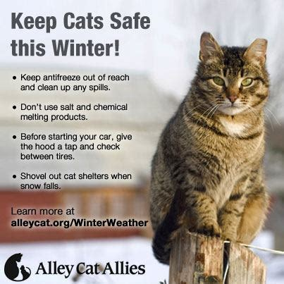 safety cat winter safety for pets