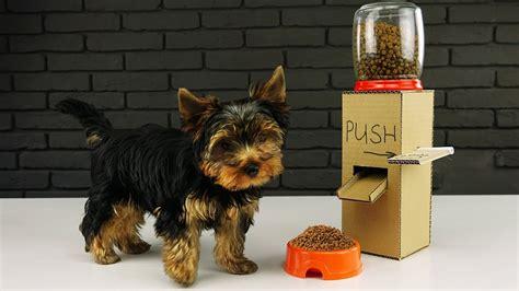 diy puppy dog food dispenser  cardboard  home youtube