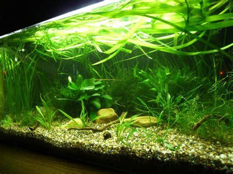 11 Tipps für dein perfektes Kampffisch Aquarium11 Tipps