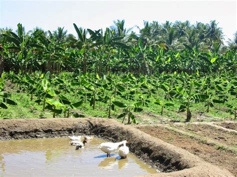 WIT : การเลือกซื้อที่ดินเพื่อทำเกษตร หนึ่งไร่แก้จน