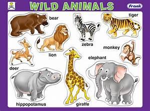 science-santaisabel - 1º Primaria - 8 Animals