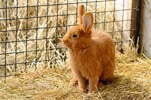 Kaninchenstall Selber Bauen Anleitung Kostenlos : bauanleitung kaninchenstall zum selber bauen ~ Lizthompson.info Haus und Dekorationen