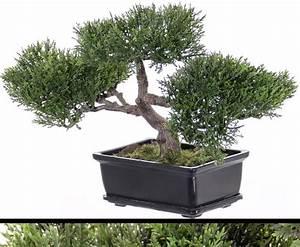 Bonsai Stecklinge Machen : k nstlichen bonsai hier g nstig online kaufen ~ Indierocktalk.com Haus und Dekorationen