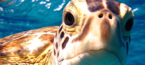 travel charter palm beach destinations florida summer