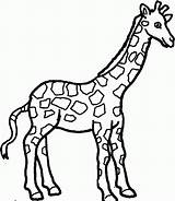 Coloring Pages Cute Giraffes Giraffe Printable Popular sketch template