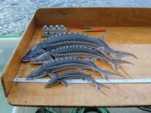 odfw private fish ponds fish stocking