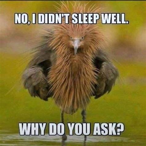Funny Memes About Sleep - silly saturday the animal kingdom bebee producer