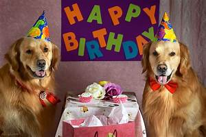 BZ Dogs: Happy Birthday