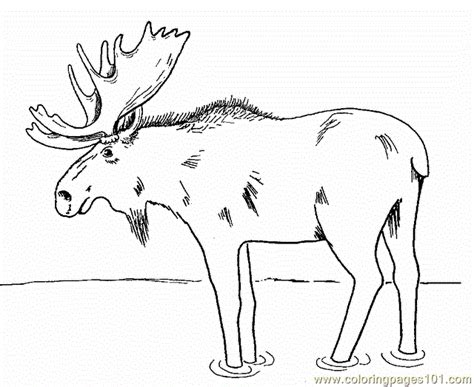 moose coloring page  mouse coloring pages coloringpagescom