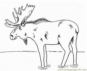 Moose, Coloring, Page