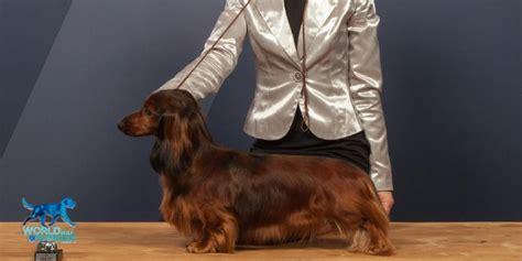 dachshund vdh rasselexikon