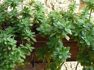 Plante Succulente Espèces Représentatives : photo plantes grasse ~ Nature-et-papiers.com Idées de Décoration