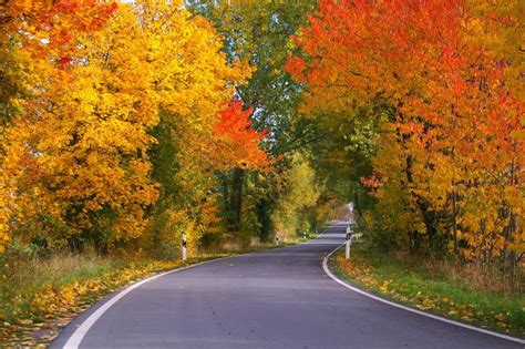 why do trees change color fall leaves why do leaves change color in the fall the
