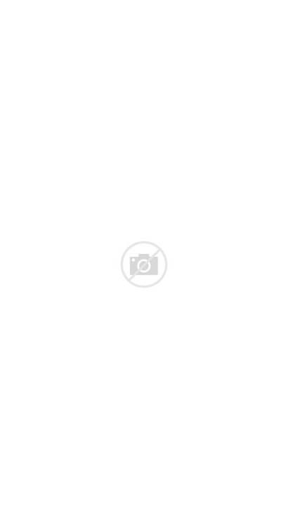 Tree Christmas Snow Lights Falling Woods Trees