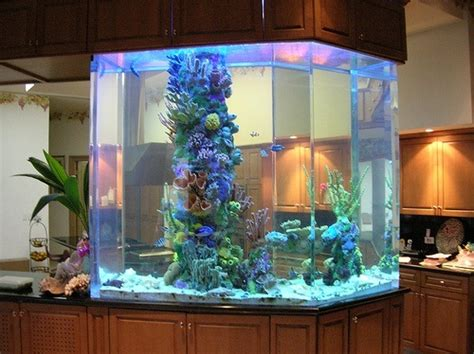 Ideas For Fish Tank by 30 Fish Tank Ideas For A Relaxing Home