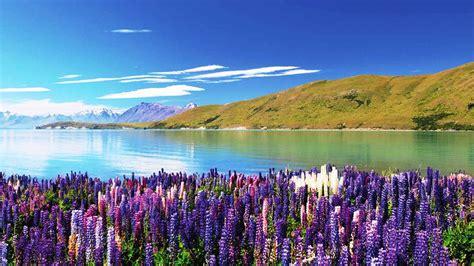 Lake Tekapo New Zealand Feel The Planet