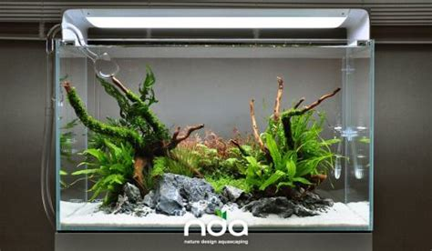 Simple Aquascaping Ideas by Favourites Simple Scape By Natura Design Aquascaping More