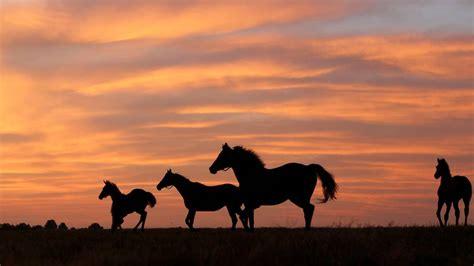 kentucky riding horse