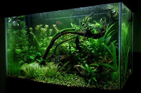 29 gallon aquarium search engine at search