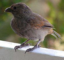 Fauna Of Barbados