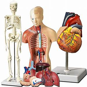 Top 10 Anatomy Doll With Removable Organs Of 2020