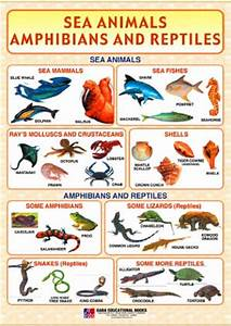 Amphibians Animals List