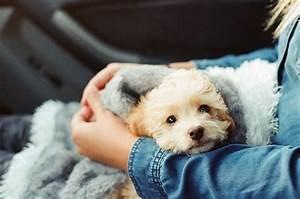 Was Kann Man Beim Hauskauf Steuerlich Absetzen : hundehaftpflichtversicherung steuerlich absetzen geht ~ Lizthompson.info Haus und Dekorationen