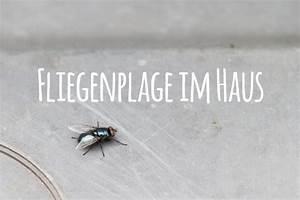 Fliegenplage Im Haus : fliegenplage im haus fliegen stubenfliegen effektiv vertreiben ~ Eleganceandgraceweddings.com Haus und Dekorationen
