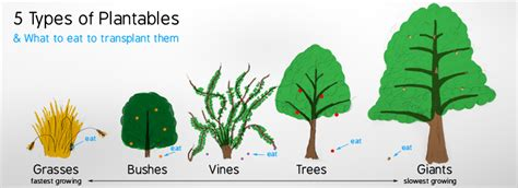 different types of plants pictures of different types of plants for kids www pixshark com images galleries with a bite