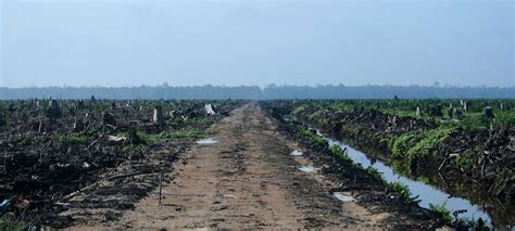 palm oil union  concerned scientists