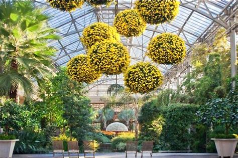 longwood gardens chrysanthemum festival returns