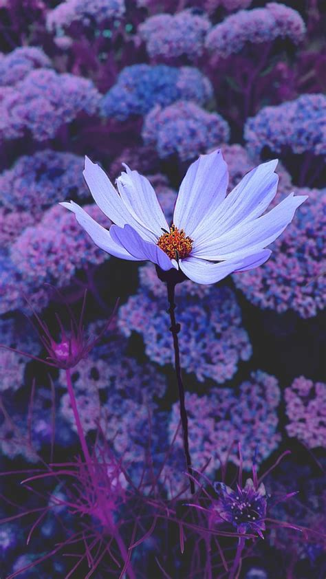 Tumblr Wallpapers Purple - Wallpaper Cave