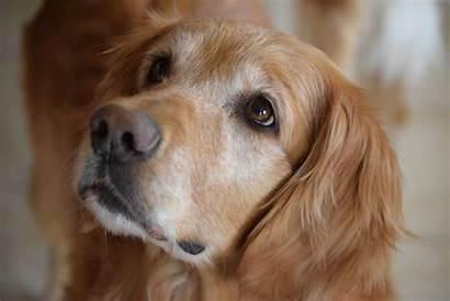 Breeds Dog Aggressive Least Pet Canna
