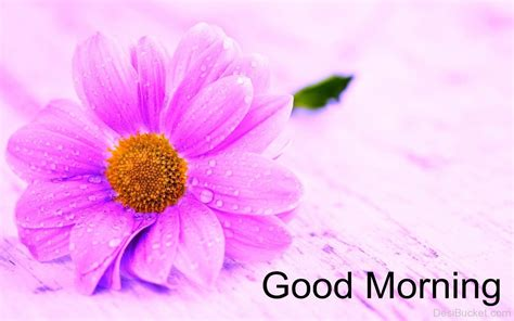 Morning Images Morning Wishes With Flowers Pictures Images Photos
