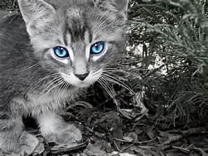 The warrior cats: Oceanclan