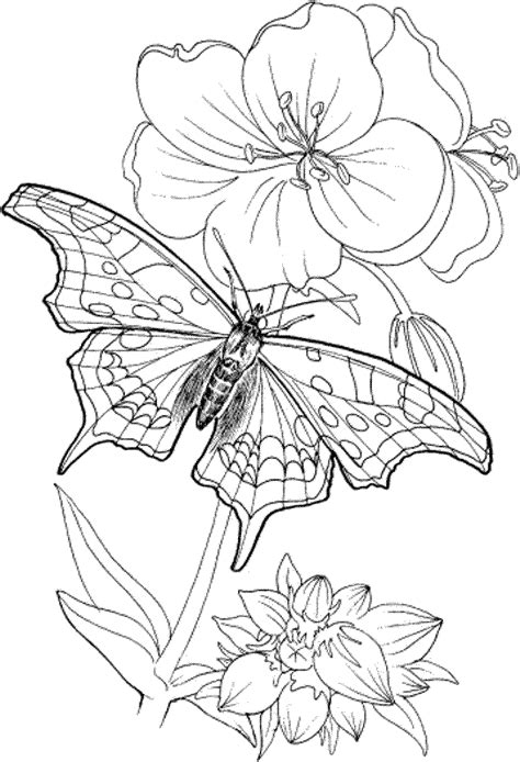 printable coloring pages adults  coloring home