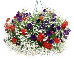 Recipes Patriotic Planting by 232 Best Window Box Planter And Container Planting
