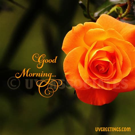 good morning images uvgreetings