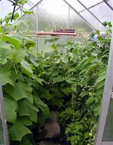 Gurken Und Tomaten Zusammen Im Gewächshaus : gurken und tomaten zusammen im gew chshaus haus ~ A.2002-acura-tl-radio.info Haus und Dekorationen