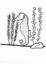 Seaweed Coloring Seahorse Kelp Drawing Around Getdrawings Printable Nature Getcolorings Pag sketch template