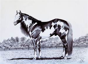 Black And White Overo Paint Horse Drawing by Cheryl Poland
