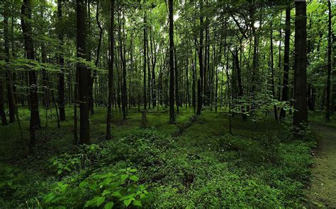 Green Forest Picture by Green Forest Backgrounds Wallpaper Cave