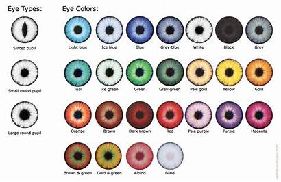 Eye Colors Different Types Eyes Chart Type