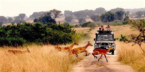 uganda travel bureau must read best uganda travel tips guide